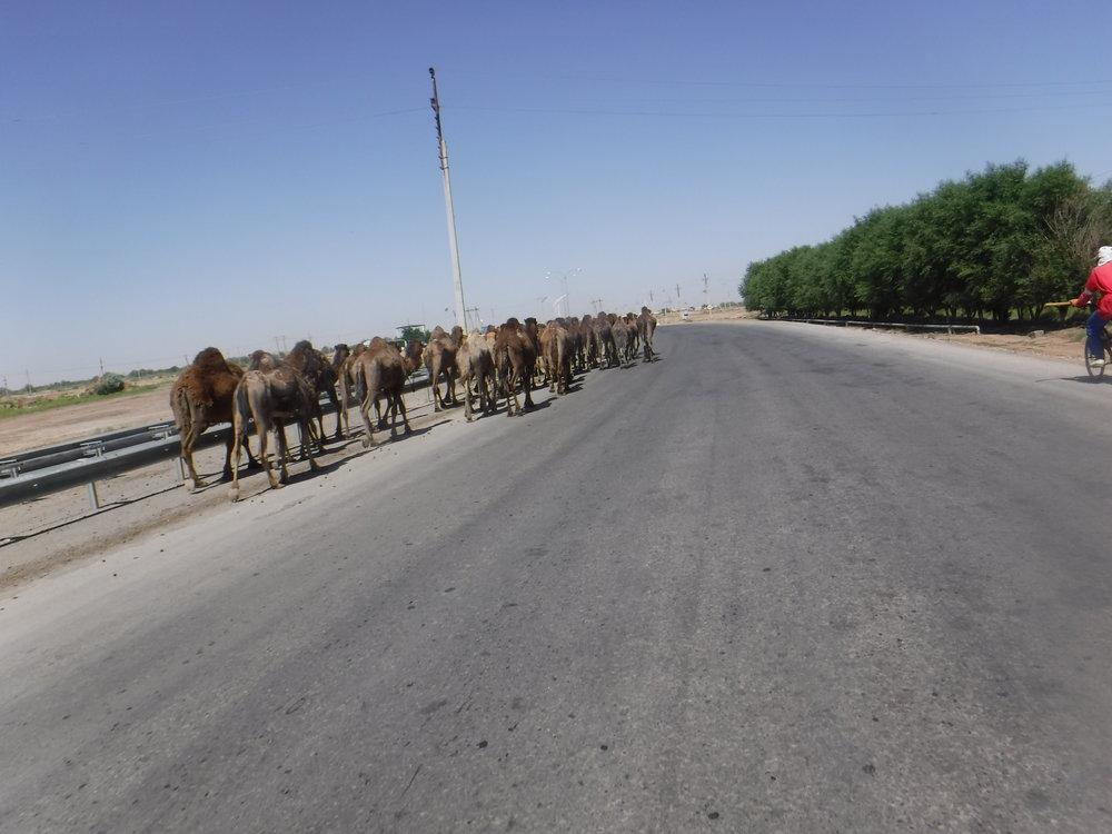 ...jossa on paljon kameleita.