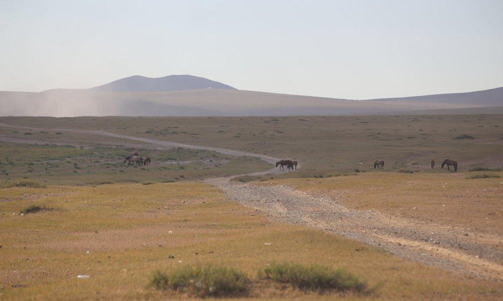 Gobi Dunes 201809 | Mongolia