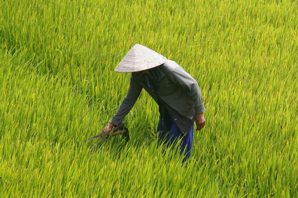 Vietnam_17022008_4006.JPG