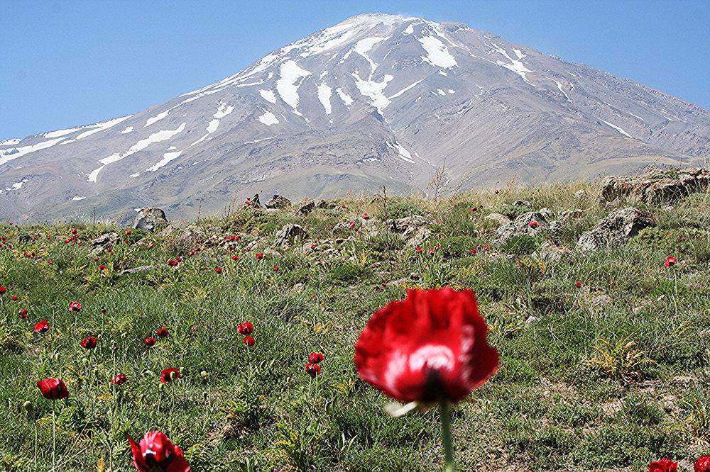 Mountains_Poppies_436497.jpg