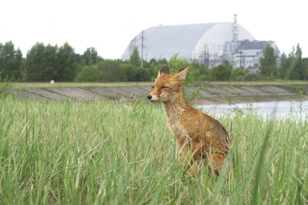 Tsernobyl Pribaja13317.jpg