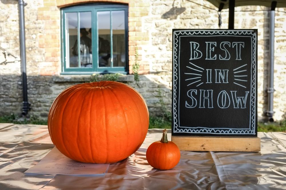 H&W Pumpkin Fest 2015-19.jpg