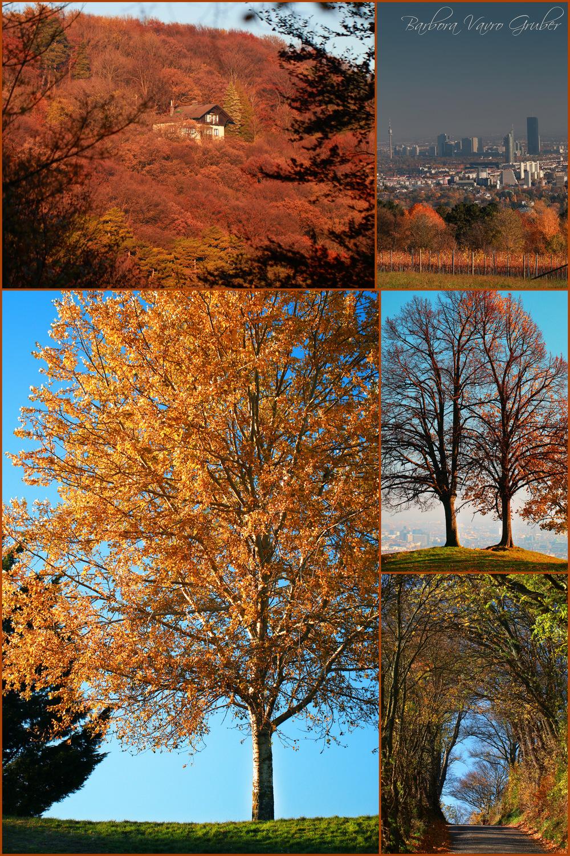 Herbst_Wien.jpg