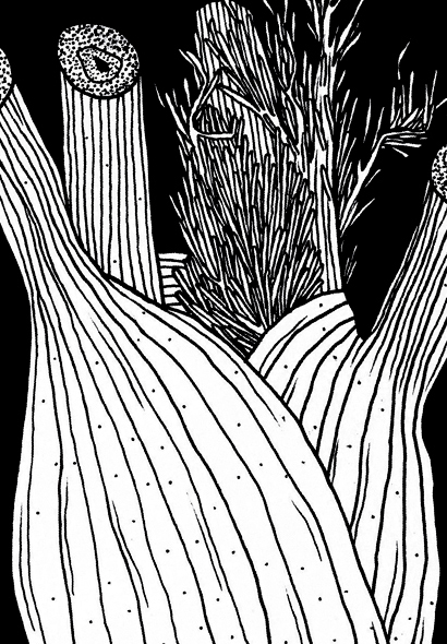 fenchel_detail.jpg