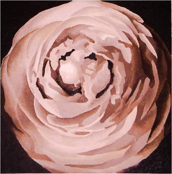 ranunculus, oil on canvas