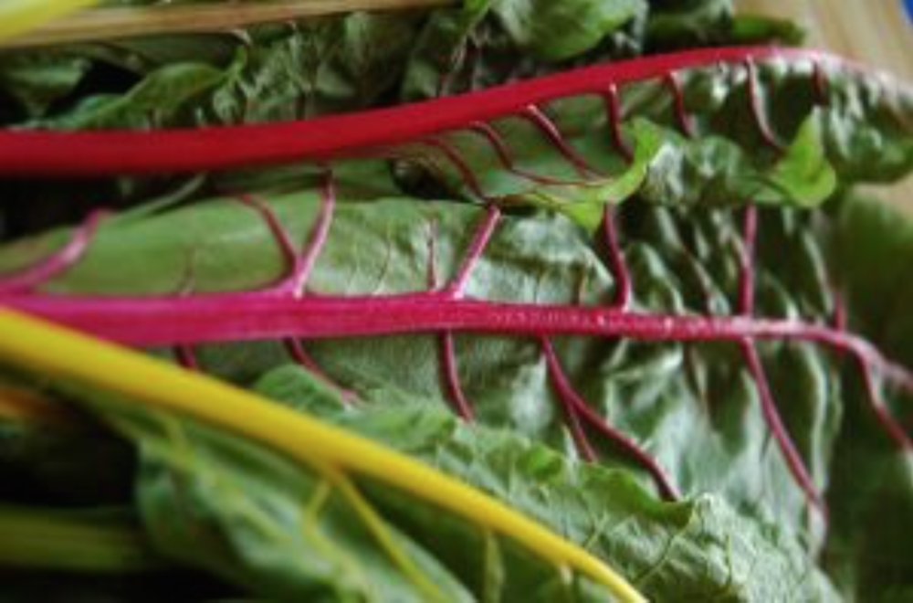 Vegetable Chard