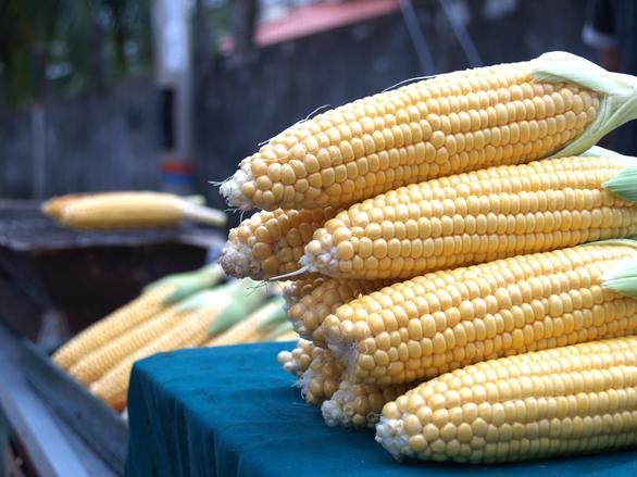 corn-1568788.jpg