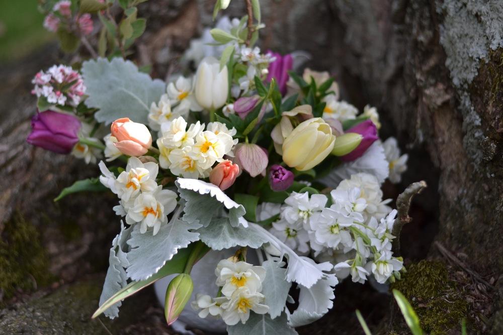 Buckeye Blooms Spring  - 02.jpg