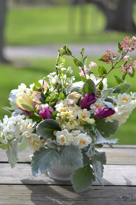 Buckeye Blooms Spring  - 03.jpg