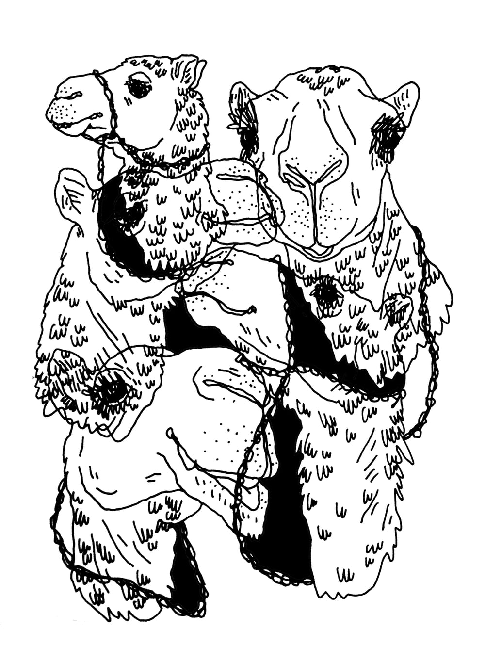 TheNest_Illustrations_Camels.jpg