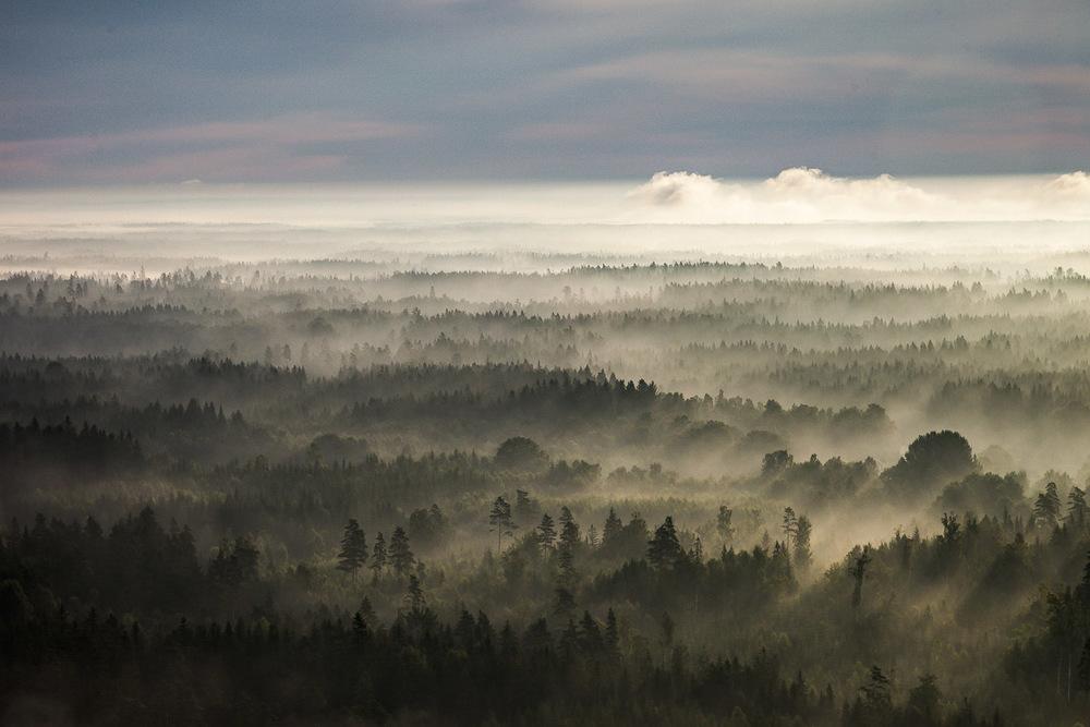Skog nära Linneryd