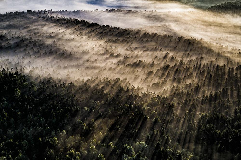 Skog nära Säffle