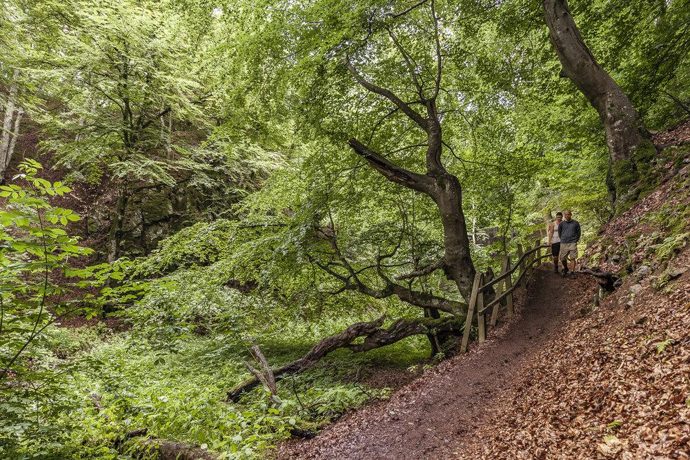 Vandring i Forsakar-ravinen i Degerberga