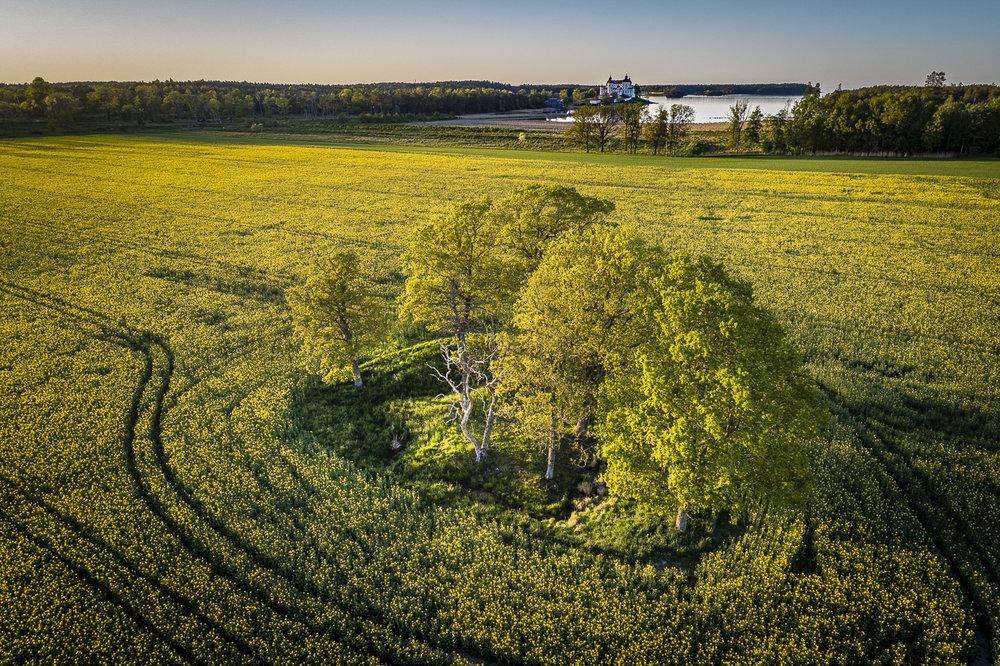 Läckö slott - En sexkant från en parkanläggning som anlades på 1600 talet