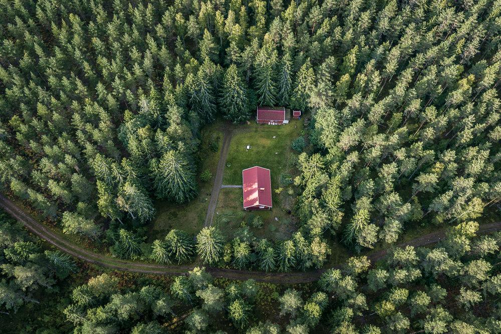 Skogsbrukslagen tillåter plantering intill tomtmark