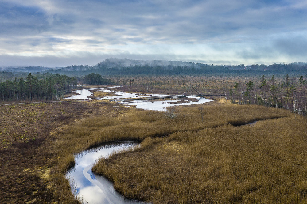 Vänga mosse norr om Borås