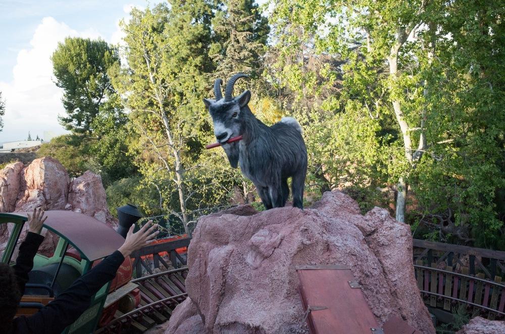 GOAT among goats