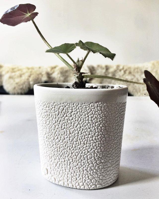 Little buddy cutting gets a fancy new home! . . #rcboisjoli #plantcuttings #transplant #begonia #ceramicplanter