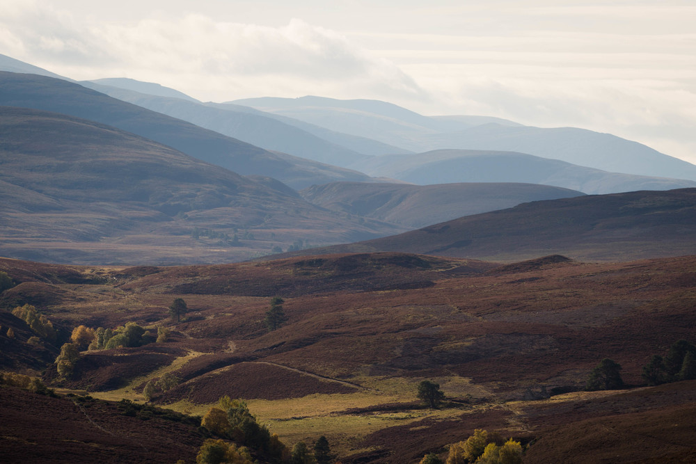 Cairngorms  (12 of 25).jpg