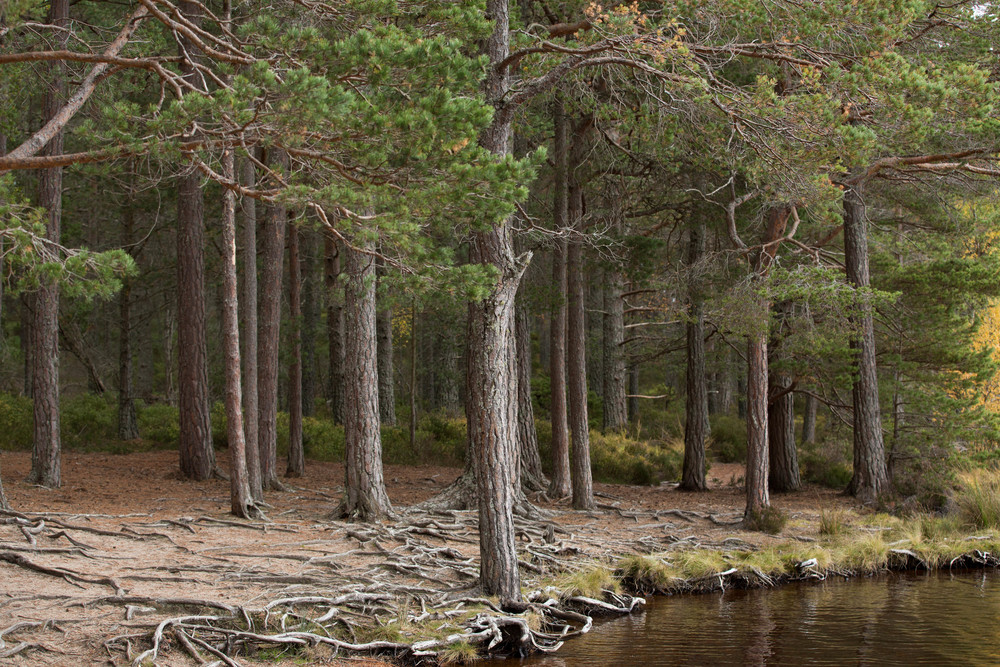 Cairngorms  (13 of 25).jpg