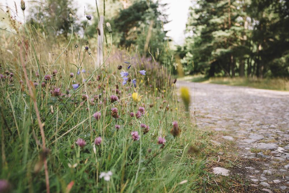 Wildflowers, Scotland
