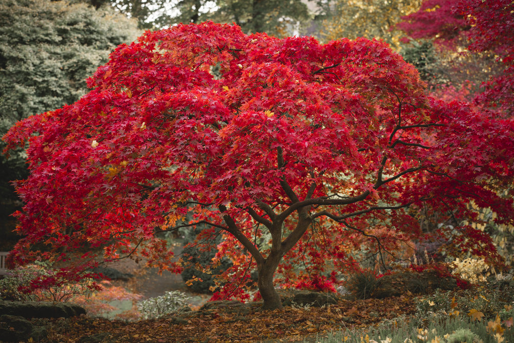Autumn in Scotland - Johnstone Gardens, Aberdeen