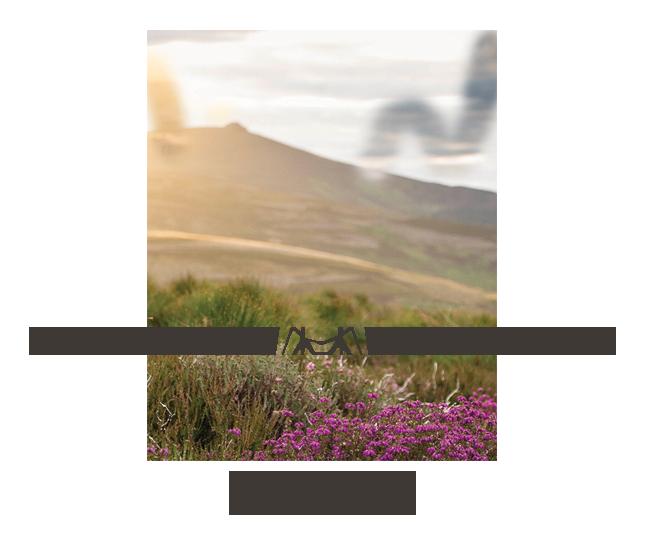 KatrinaStewart_Primary_RGB.png