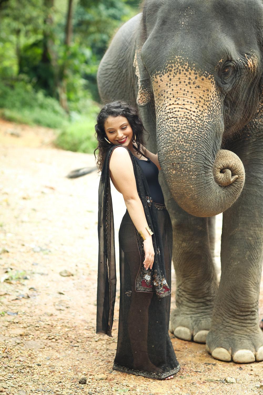 elephant-5.jpg