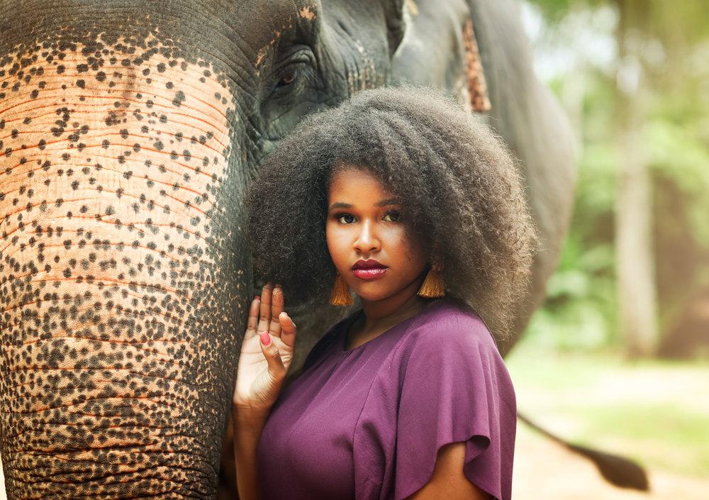elephant-6.jpg