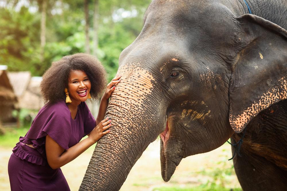 elephant-10.jpg