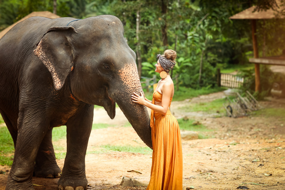 elephant-13.jpg
