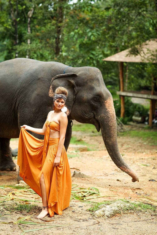 elephant-15.jpg