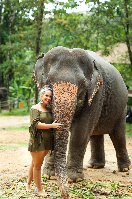 elephant-22.jpg
