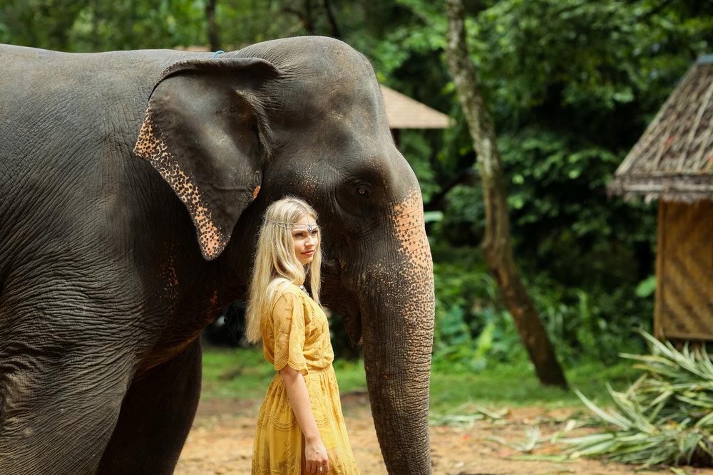 elephant-25.jpg