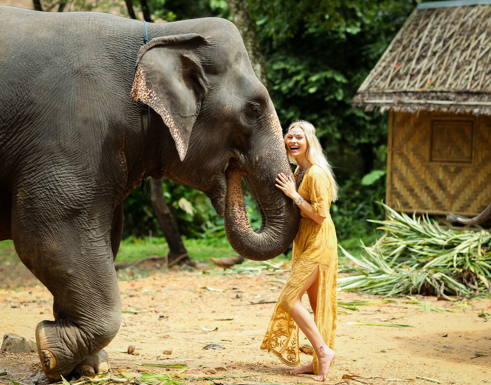 elephant-26.jpg