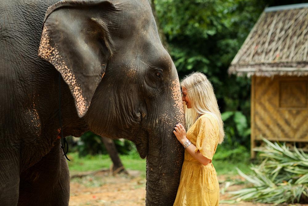 elephant-29.jpg