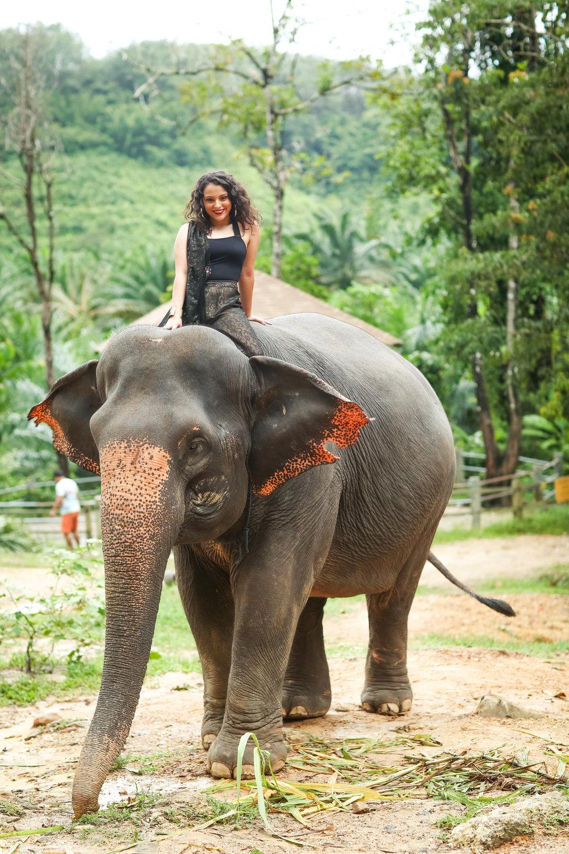 elephant-30.jpg