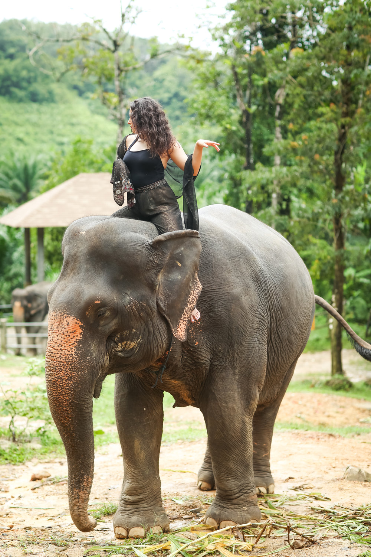 elephant-31.jpg