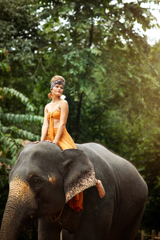 elephant-35.jpg