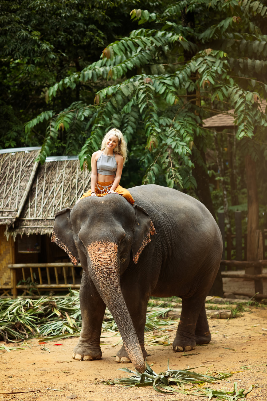 elephant-40.jpg