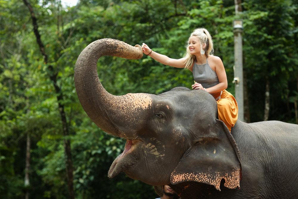elephant-42.jpg