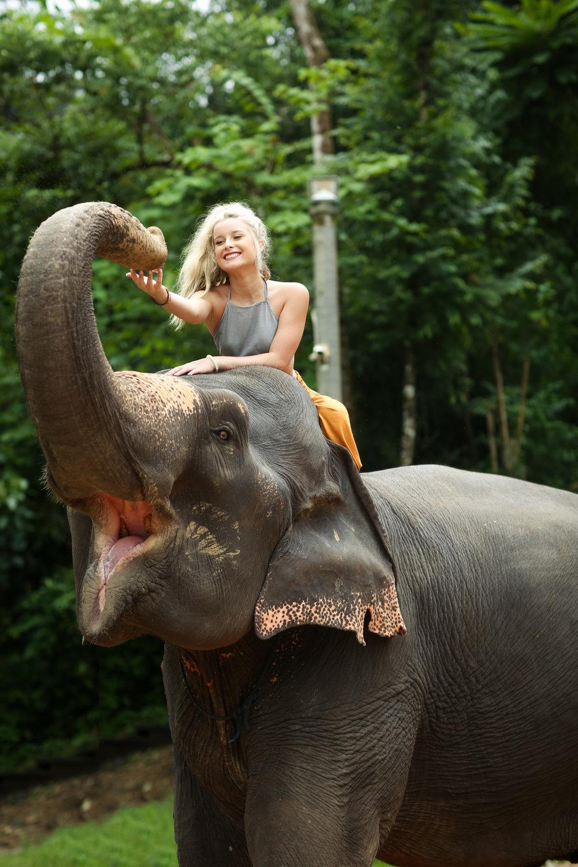 elephant-43.jpg