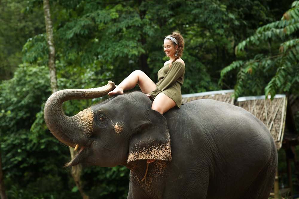 elephant-49.jpg