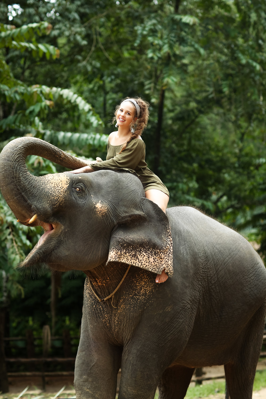 elephant-50.jpg