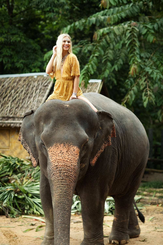 elephant-51.jpg