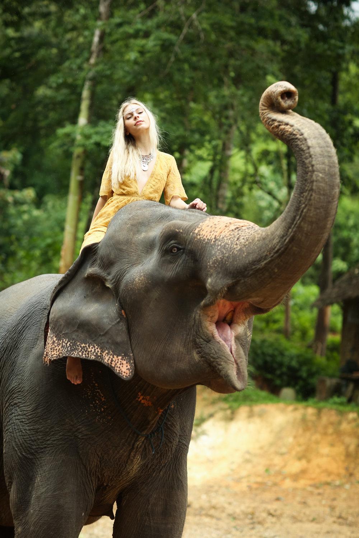 elephant-54.jpg