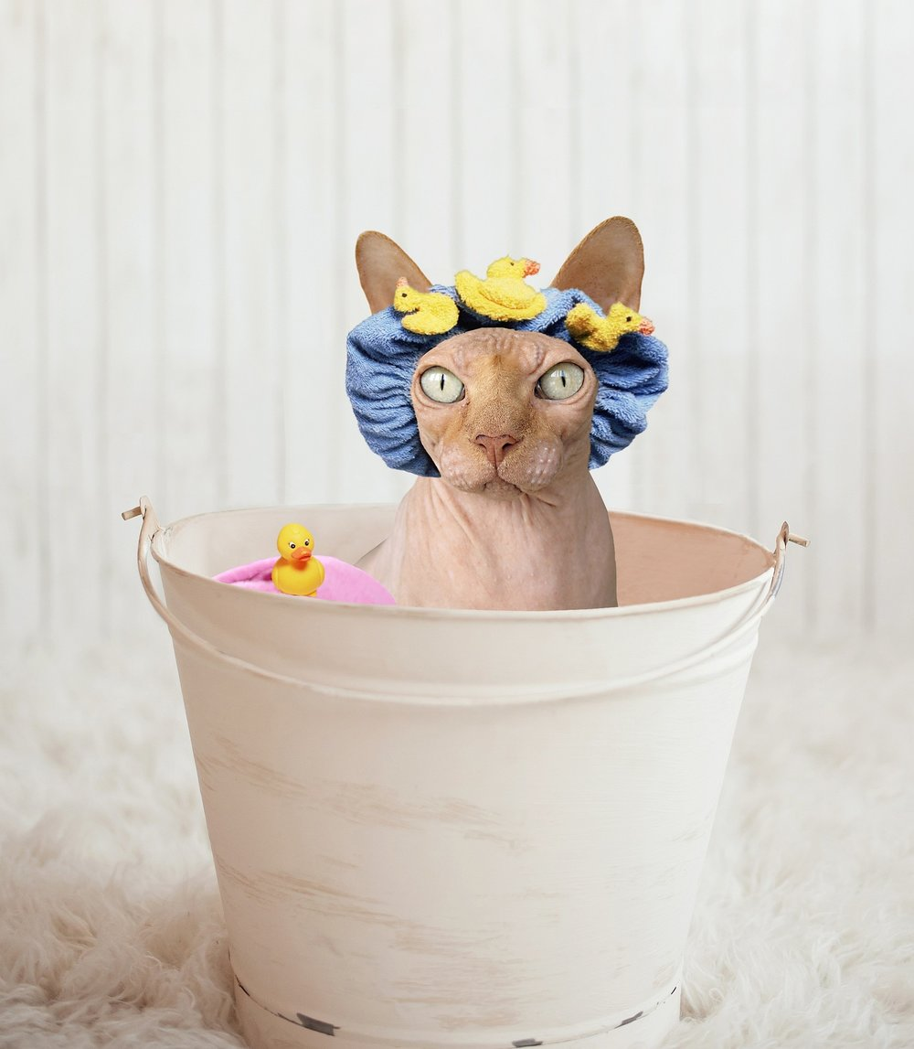 sphinx bath funny tub bucket hairless