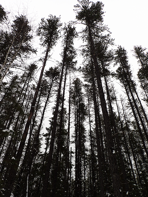 breathtaking trees in Kirkland Lake