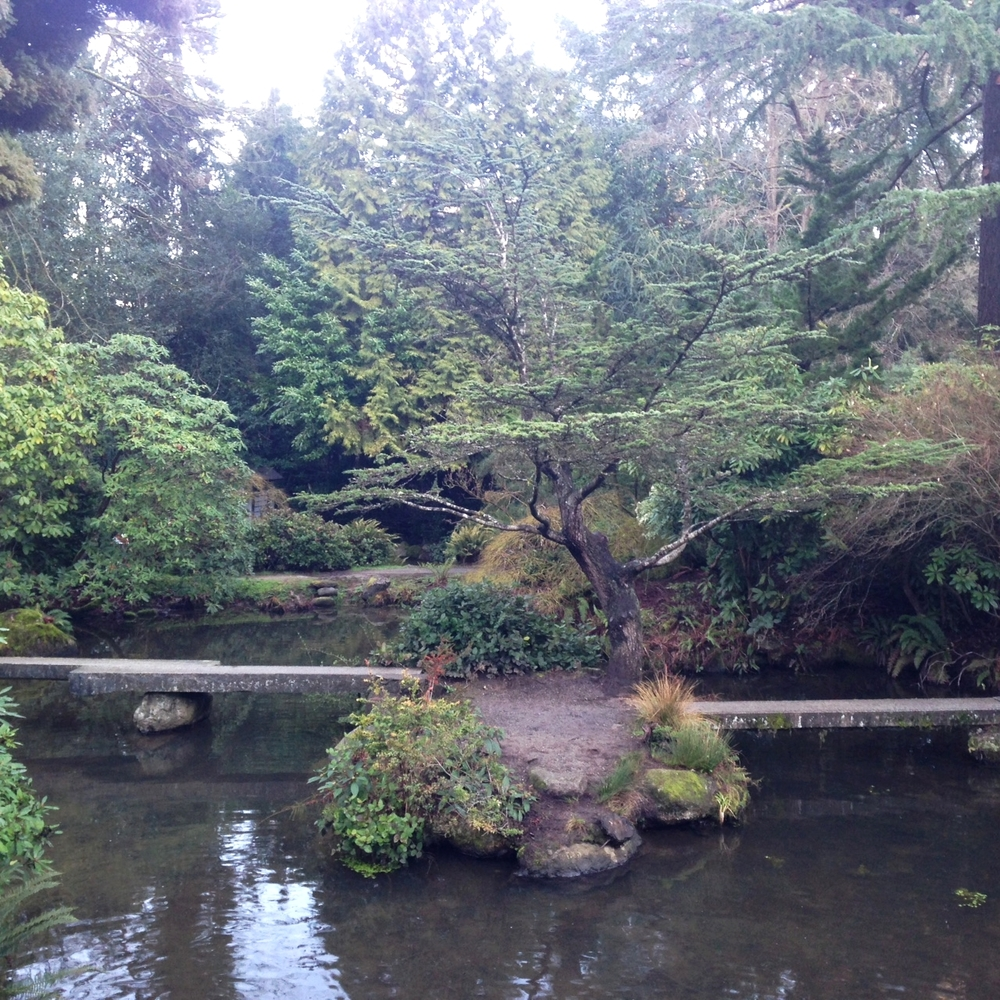 Incredible Japanese garden in South Seattle
