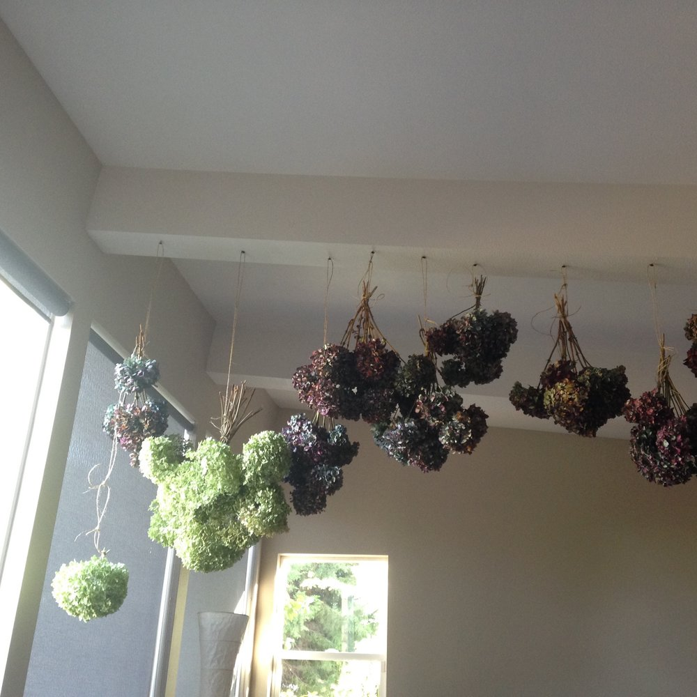 Hanging bunches of flowers resemble notes on a sheet of music.